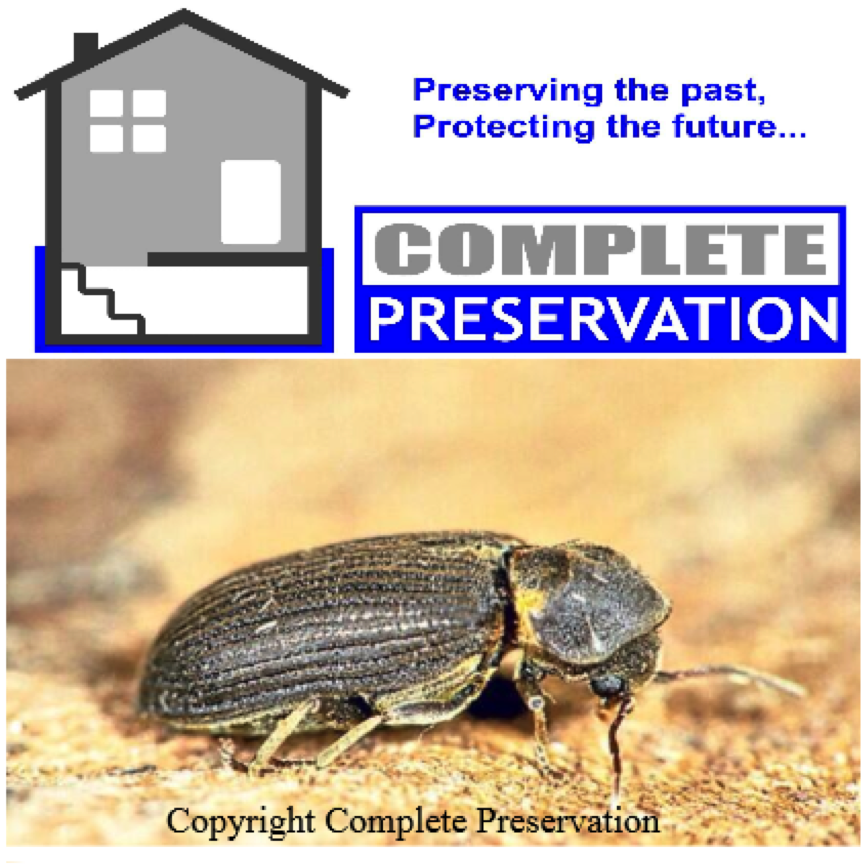 DEATHWATCH BEETLE IMAGE, woodworm survey wiltshire, woodworm survey wiltshire