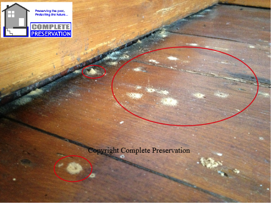 woodworm emerging from floor,DEATHWATCH BEETLE IMAGE, woodworm survey wiltshire, woodworm survey wiltshire