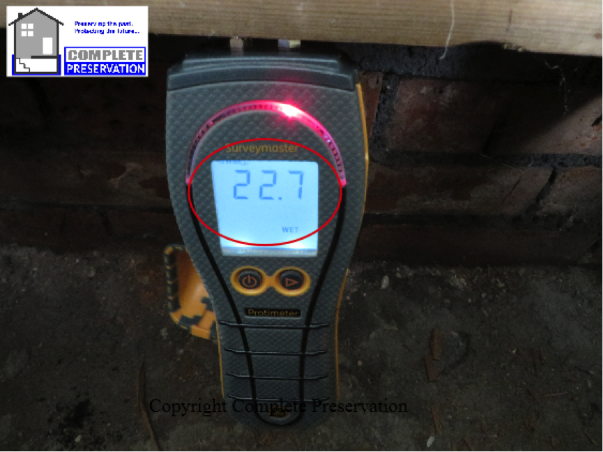 woodworm moisture under floor, sub floor survey wiltshire,DEATHWATCH BEETLE IMAGE, woodworm survey wiltshire, woodworm survey wiltshire