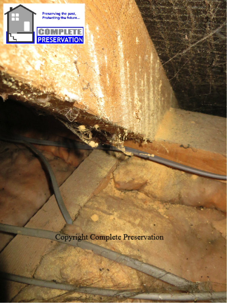 woodworm rafter, woodworm in a roof,DEATHWATCH BEETLE IMAGE, woodworm survey wiltshire, woodworm survey wiltshire